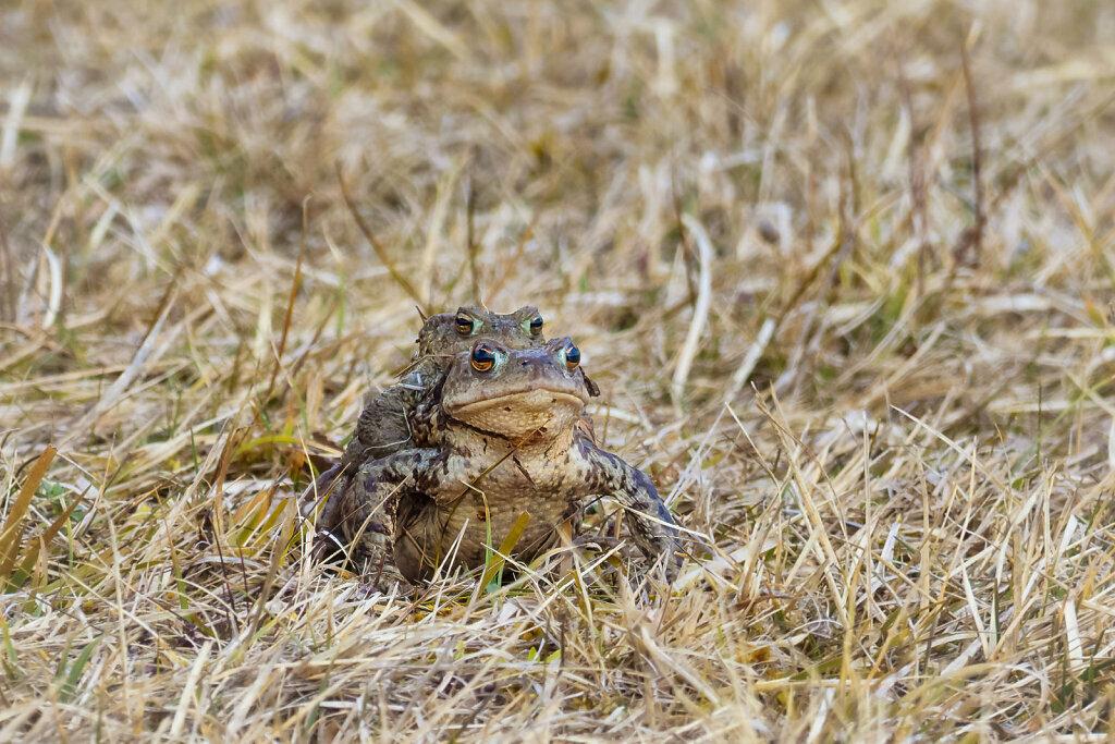 Toads I
