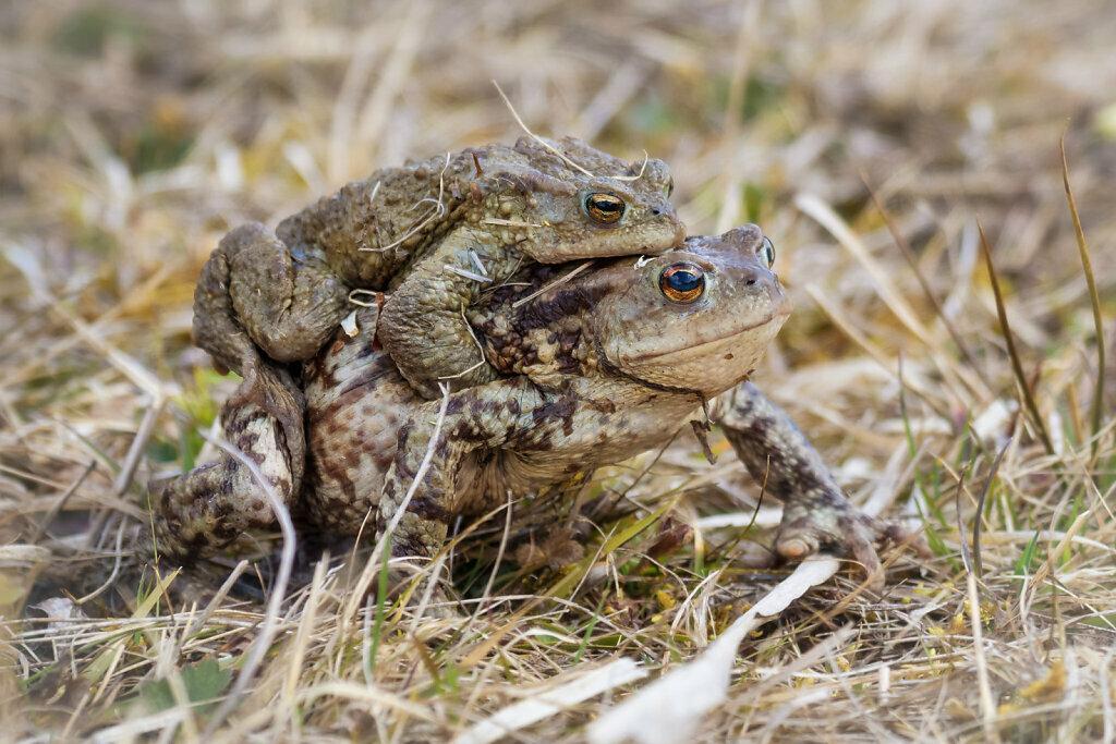 Toads II